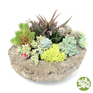 Succulent Trough Kit